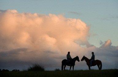 image horse-sillouette-jpg