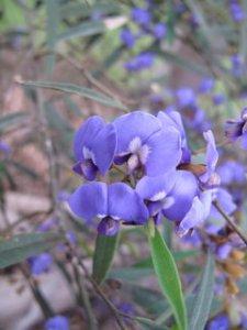 image margaret-river-wildflowers-jpg