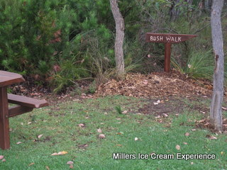 millers-ice-cream-experience-10