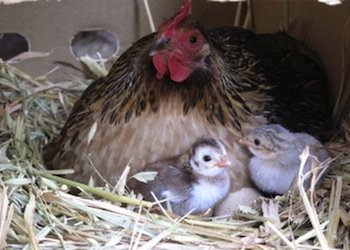image olive_hill_farm_farmstay-5-jpg