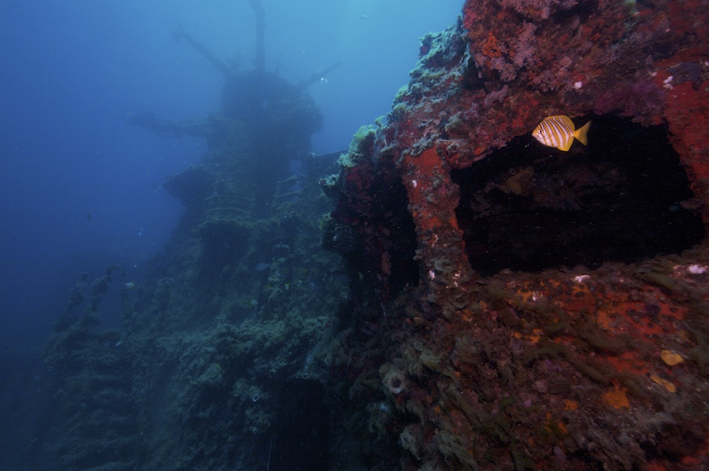 Part of the sunken ship