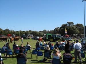 Ag Show Equestrian