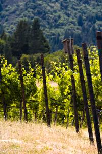 Gourmet Traveller Wine Tours